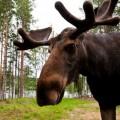 lola_akinmade_akerstrom-moose-1610